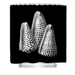 Alphabet Cone Shells Conus Spurius Shower Curtain