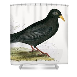 Alpine Chough Shower Curtain by English School