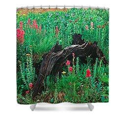 Alpine Flowers In Yankee Boy Basin Shower Curtain