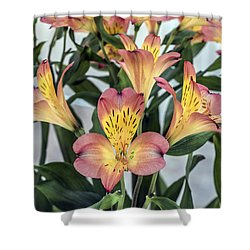 Alstroemeria Blossoms Shower Curtain