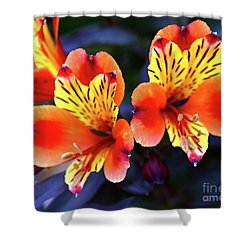 Shower Curtain featuring the photograph Alstroemeria Indian Summer by Baggieoldboy
