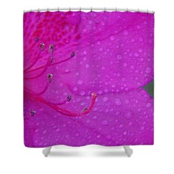 Althea Shower Curtain by Priscilla Richardson