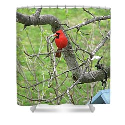Always With Us -cardinals Shower Curtain