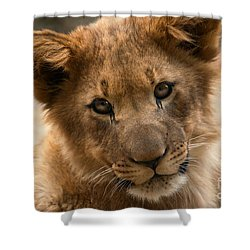 Shower Curtain featuring the photograph Am I Cute? by Christine Sponchia