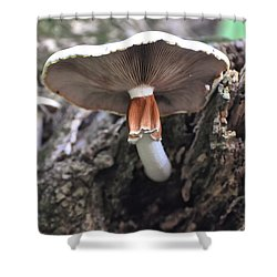 Amanita Shower Curtain by Chris Flees