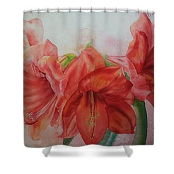 Amarylis Shower Curtain by Ruth Kamenev
