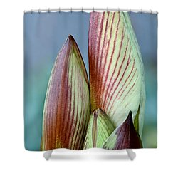 Shower Curtain featuring the photograph Amaryllis Buds by Werner Lehmann