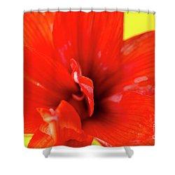 Amaryllis Jaune Red Amaryllis Flower On Bright Yellow Background Shower Curtain by Andy Smy