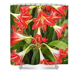 Amaryllis Lily Bunch Shower Curtain