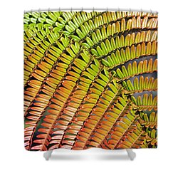 Amaumau Fern Frond Shower Curtain by Greg Vaughn - Printscapes