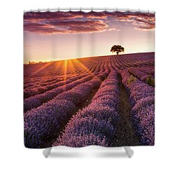 Amazing Lavender Field At Sunset Shower Curtain by Evgeni Dinev