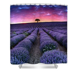 Amazing Lavender Field With A Tree Shower Curtain by Evgeni Dinev