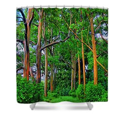 Amazing Rainbow Eucalyptus Shower Curtain