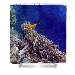 Amazing Red Sea 2 Shower Curtain