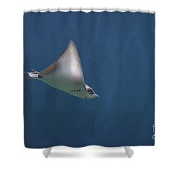 Amazing Stingray Underwater In The Deep Blue Sea  Shower Curtain