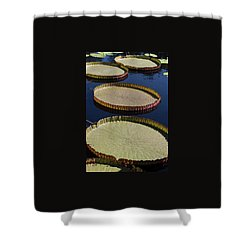 Shower Curtain featuring the photograph Amazonas Lily Pads II by Suzanne Gaff