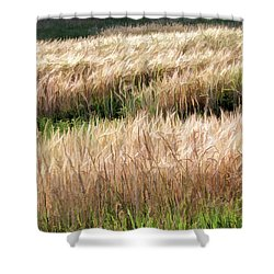 Amber Waves -  Shower Curtain