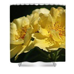 Amber Yellow Country Rose Shower Curtain