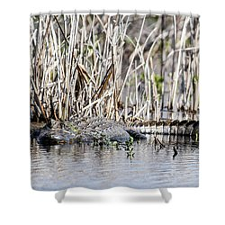 Shower Curtain featuring the photograph American Alligator by Gary Wightman