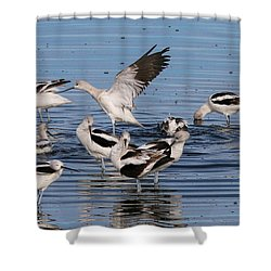 American Avocet's Taking A Break Shower Curtain