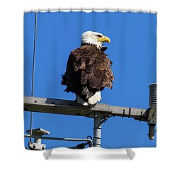 American Bald Eagle On Communication Tower Shower Curtain by David Gn