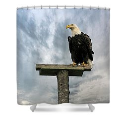 American Bald Eagle Perched On A Pole Shower Curtain