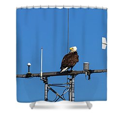 American Bald Eagle Perched On Communication Tower Shower Curtain by David Gn