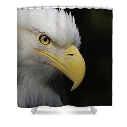 American Bald Eagle Portrait 4 Shower Curtain by Ernie Echols