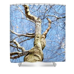 Shower Curtain featuring the photograph American Beech Tree by Christina Rollo