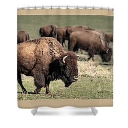 American Bison 5 Shower Curtain