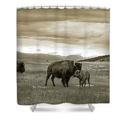 American Bison Calf And Cow Shower Curtain