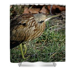 Shower Curtain featuring the photograph American Bittern by Douglas Stucky
