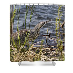 American Bittern Hunting Shower Curtain
