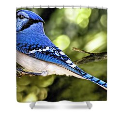 Blue Jay Bokeh Shower Curtain