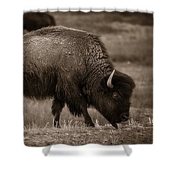 Shower Curtain featuring the photograph American Buffalo Grazing by Chris Bordeleau