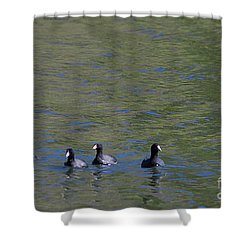 American Coots 20120405_280a Shower Curtain