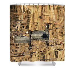American Coots Shower Curtain