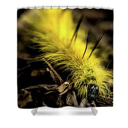 American Dagger Moth Caterpillar Shower Curtain