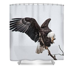 Shower Curtain featuring the photograph American Eagle  by Kelly Marquardt