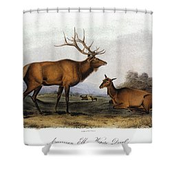 American Elk, 1846 Shower Curtain by Granger