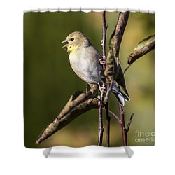 Shower Curtain featuring the photograph American Goldfinch In Fall Colors  by Ricky L Jones