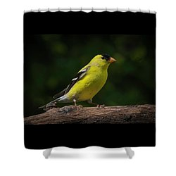 American Goldfinch Male Shower Curtain