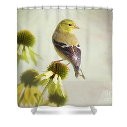 American Goldfinch On Coneflower Shower Curtain