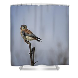 American Kestrel Shower Curtain by Gary Hall