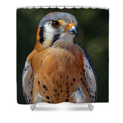 American Kestrel Portrait  Shower Curtain