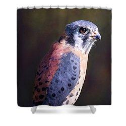 American Kestrel Portrait Shower Curtain