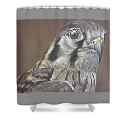 American Kestrel Shower Curtain