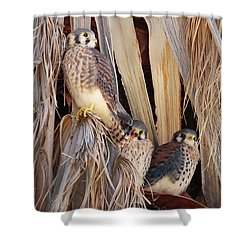 American Kestrels Shower Curtain