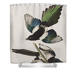 American Magpie Shower Curtain by John James Audubon
