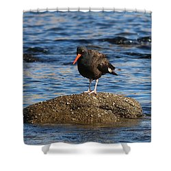 American Oystercatcher - 2 Shower Curtain